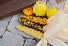 Three Cobs Of Ornamental Corn ...