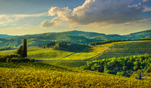 Panzano In Chianti Vineyard An...