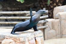 Portrait Of A Sea Lion (zaloph...