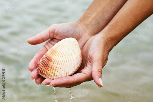 Large bivalve sea shell in the hands. Sea inhabitants close up Canvas Print