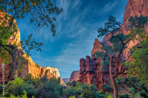 Tablou Canvas The stunning red cliffs of the Amphitheater, Zion National Park, Springdale, Uta
