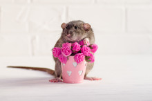 Gray Rat Dambo With Funny Ears Sits On A White Background Near A Bucket With Pink Flowers, A Concept For A Spring Or Woman Day And For Greeting Card With Copyspace