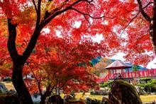 渓石園の紅葉