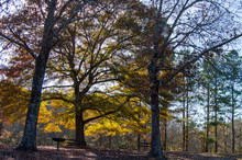 Little Mulberry Park, GA Autumn Landscape