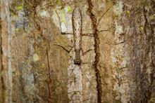Image Of Camouflaged Bark Mant...