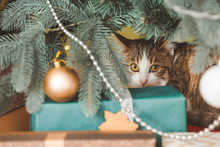 Cute Funny Cat Under Christmas...