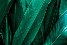 Green Leaf Texture, Dark Green...