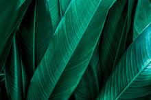 Green Leaf Texture, Dark Green Foliage Nature Background, Tropical Leaf