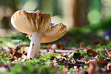 Mushroom In The Forest On A Mo...