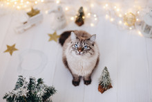 Cat Sitting Near The Christmas...