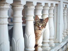 Curious Cat Peeks Out From Behind The Balustrade