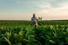 Senior Farmer Standing In Soyb...