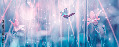 Fototapety niebieskie  dreamy-spring-bellflowers-bloom-butterfly-close-up-sunlight-panorama-spring-floral-mixed