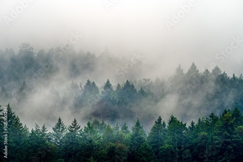 Smoke coming out of a forest full of different kinds of green plants in Canada