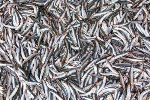 Anchovy Fish (Hamsi) for Sale at Market From Black sea - Organic Seafood Canvas Print