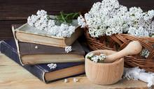 Yarrow Wild Field Herb On Old ...