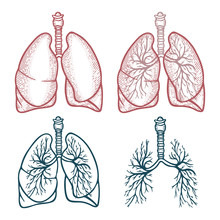 Lungs. Lungs Hand Drawn Vector...