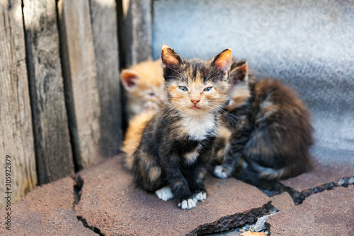 Photographie A small kitten from a small flock of homeless street kittens looks with care