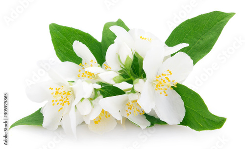 Photographie Fresh jasmine on white background