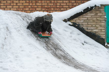 Funny Child Dressed In Adult Oversized Jacket Riding Sled Down Icey Trek From Cellar In Winter Day. Little Girl With Emotional Face Riding Slide In The Village Yard.