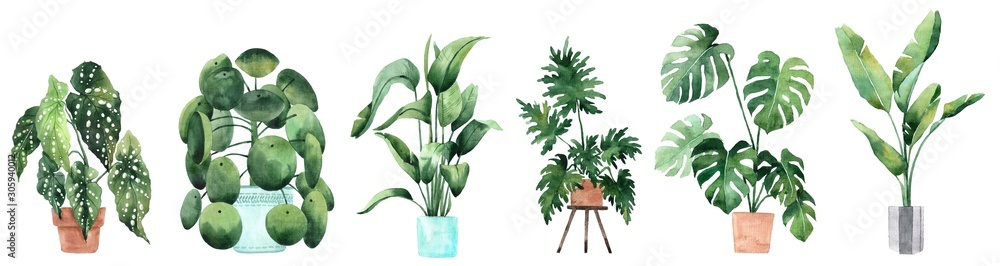Fototapeta Watercolor image with tropical leaves and leaves of indoor plants. Home plant in pots. Greenery. Juicy. Floral design element. Perfect for invitations, cards, prints, posters.