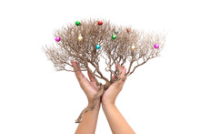 Hands Gently Hold Dry Branch O...