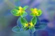canvas print picture - Kleine Gelbe Blüten