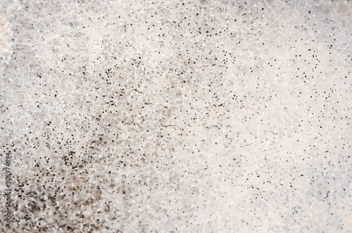 Background, texture of black and white fluffy mold close-up Fototapet