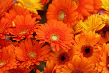 Orange Gerber Daisy Flowers Bo...