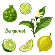 Bergamot Orange Fruit Slice, Kaffir Lime Plant