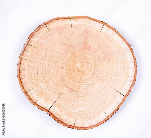 Fotografia Slice of fresh oak wood on a white background
