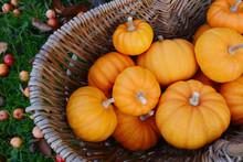 Woven Basket Full Of Jack Be Little Mini Pumpkins