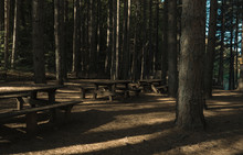 Park With Tables In The Woods