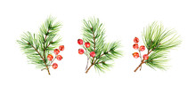 Christmas Set With Green Pine Branches And Red Berries Isolated On White Background. Watercolor Illustration For Celebration Of New Year, Greeting Cards, Banners, Invitations, Calendars.