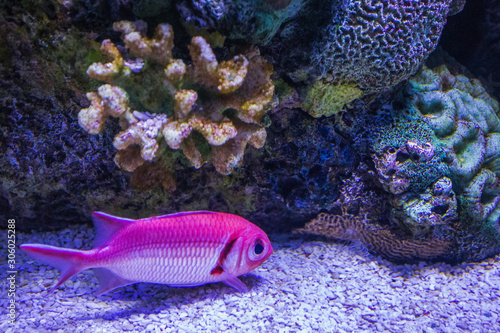 Fototapety, obrazy: tropical fish