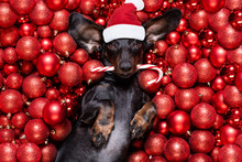 Christmas Santa Claus Dog And ...