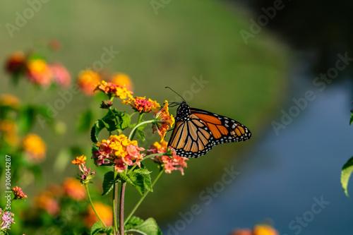 Orange Butterfly on a Flower