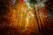 mesmerizing gorgeous dramatic view of autumn fall season golden orange red colorful forest in outdoor Canada park