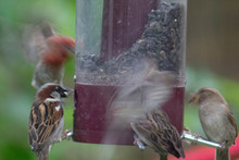 Birds Feeding At Bird Feeder