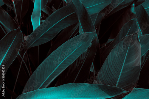 Fresh green leaves with natural background, with beautiful smooth leaves for wallpapers.