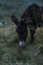 Tranquil Spotted Donkey Grazin...
