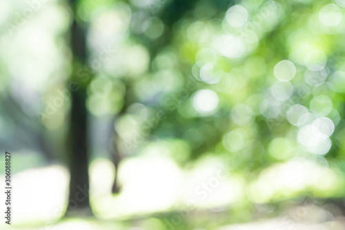 森林イメージ
