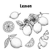 Lemon Hand Drawn Collection, G...