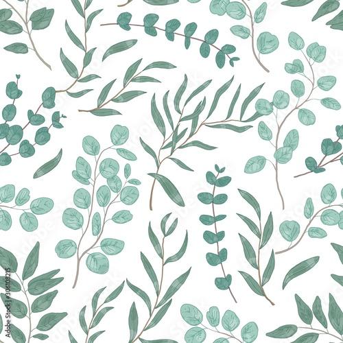 eukaliptus-pozostawia-kolorowe