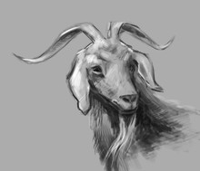 Digital Sketch With A Goat. Go...