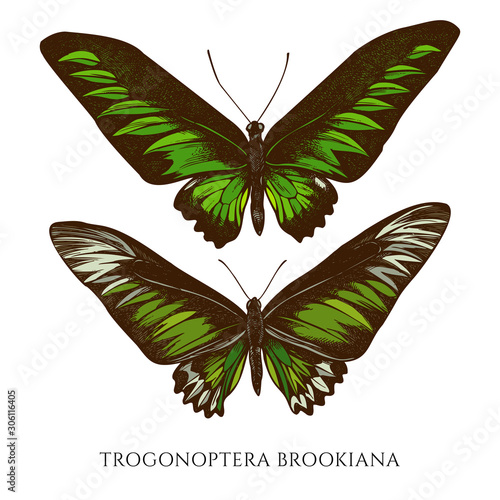 Photo  Vector set of hand drawn colored trogonoptera brookiana