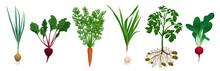 Realistic Root Vegetables Set