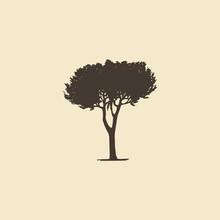 Stone Pine, Hand Drawn Silhouette. Vector Sketch Of Mediterranean Coniferous Tree.