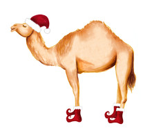 Winter Happy Camel In Santa Ha...