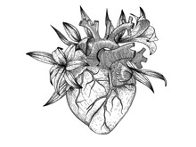 Vector Realistic Heart With Li...